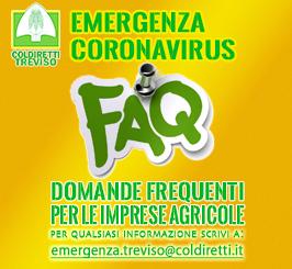 FAQ Treviso